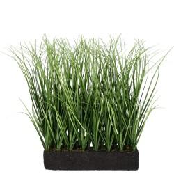 Gras Reihe